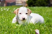 stock photo of little puppy  - Mixed-breed adorable cute little puppy outdoors on a meadow on a sunny spring day. ** Note: Soft Focus at 100%, best at smaller sizes - JPG