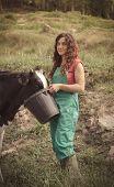 stock photo of feeding  - Farmer feeding cows on an organic farm - JPG