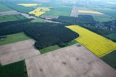 pic of rape-field  - Aerial photo of rape fields in Brandenburg county Germany middle of May. ** Note: Shallow depth of field - JPG