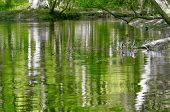 picture of swamps  - cypress forest and swamp of Congaree National Park in South Carolina - JPG