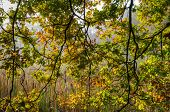 stock photo of marshlands  - Leaves and tree branches - JPG
