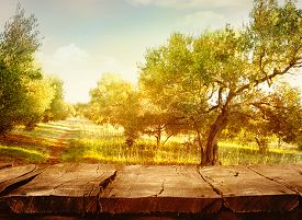image of orchard  - Wood table - JPG