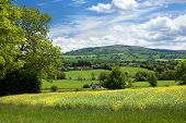 Rural Shropshire in Summer, England