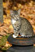 Kitten On A Milkcan poster