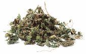 Dried Stringing Nettle