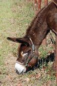Donkey through Fence