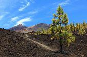 Tenerife hiking path on volcano teide. Arenas Negras landscape.
