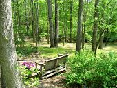 Bench In Wooded Lot
