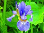 flower, snapdragon, in the park, fully developed