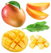 Set of mango fruits, mango slices and leaf. Clipping path for each item. poster
