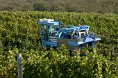 Vineyard Machine Harvest