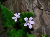 Purple flower over blur background