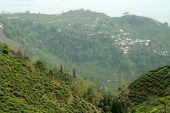 Mountain Town And Tea Garden