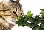Cat Sniffs Bonsai poster