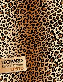 stock photo of leopard  - Leopard skin - JPG