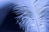 Close-up of a white feather on a blue background