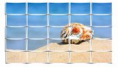 colorful shell on sandy tropical beach collage from small pics.