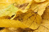 Macro on Autumn Foliage