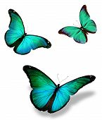 Three Turquoise Butterfly