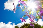 Dreamy image of purple clematis against blue sky and sun.