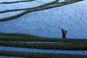 YUANYANG - DECEMBER 18: A farmer walks on the bunds of the terraced rice fields to return home in Yu