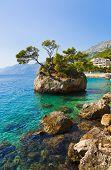 Постер, плакат: Остров и деревья в Бреле Хорватия