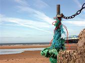 Wild Beach Rope
