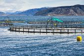 Norwegian Fish Farm For Salmon Growing In Fjord