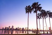 California Palm Trees and City of San Diego, California USA