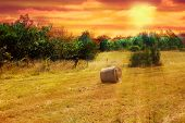 image of hayfield  - Hayfield with a single haymow at sunset - JPG
