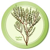 English Thyme Herb