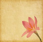 Old  paper texture with light pink lily
