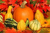 Colorful mini pumpkins on dry autumn leaves