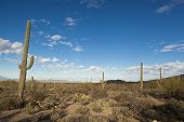 sonoran desert at dawn near Tucson, Arizona