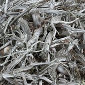 image of boggy  - pile of roots on peat bog after drying - JPG