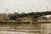Bridge martyrs in Baghdad