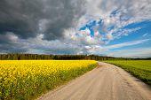 Country Road. Estonia