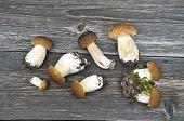 Group Fresh Fungi Mushrom Cep Boletus