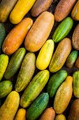 Lots Of Colorful Cucumber