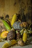 Still Life With Pumpkin, Corn, Taro, Yam.