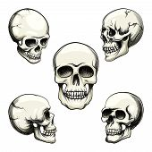 picture of morbid  - Set of five different greyscale views of a naturalistic human skull with teeth  vector illustration isolated on white - JPG