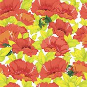 Seamless vintage floral pattern with poppy