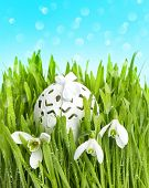 Spring Flowers And Egg Deco In Green Grass Over Blue