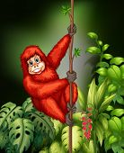 Illustration of an orangutan hanging on a vine