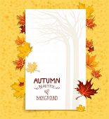 Seasonal background with maple leaves. Copy space.