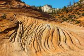Sandstone patterns - Zion national Park.