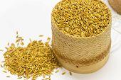 Close Up Of Rice Paddy