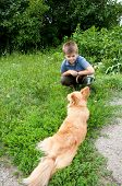 A Boy And A Red Dog In A Meadow
