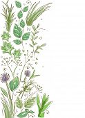 Border Illustration Featuring Common Herbs