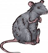 Illustration Featuring a Rat